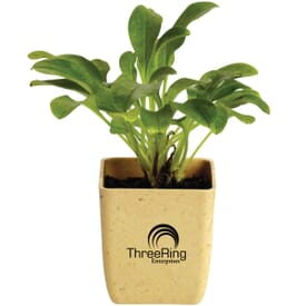 Single Potted Plant Kit