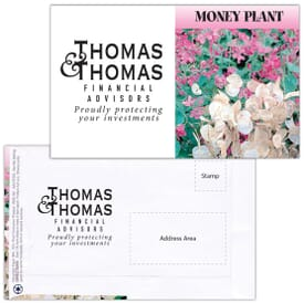 Mailable Series Seed Packet- Money Plant