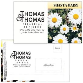 Mailable Series Seed Packet- Shasta Daisy